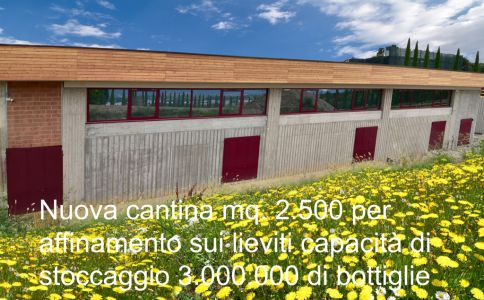 Cantina-Chiara-Ziliani-Gallery-Nuova-Cantina