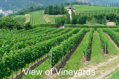 Winery-Chiara-Ziliani-Gallery-04