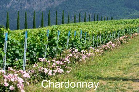 Winery-Chiara-Ziliani-Gallery-18